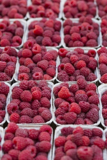 Red raspberries in boxes at local farm market