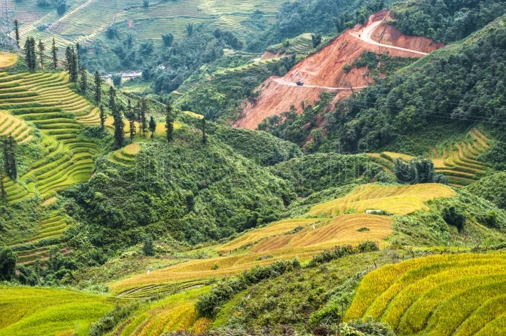 Rice field in the mountain of sapa