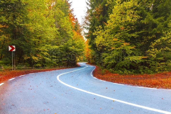 Road through forest in autumn season