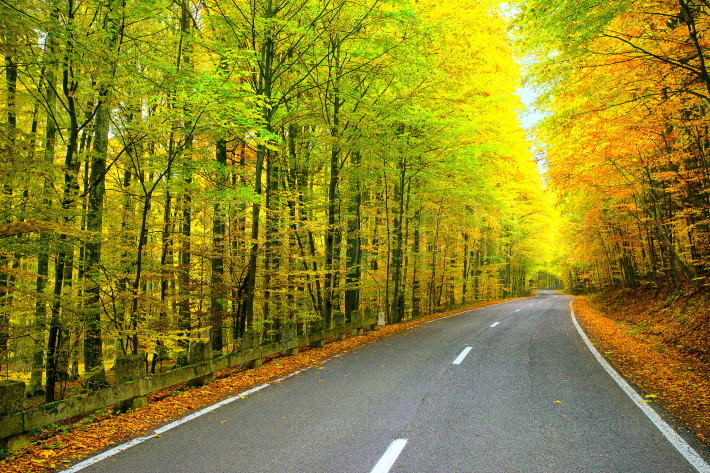 Road trough the forest in autumn season
