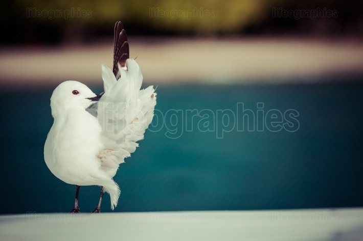 Seagulls ower nature background.
