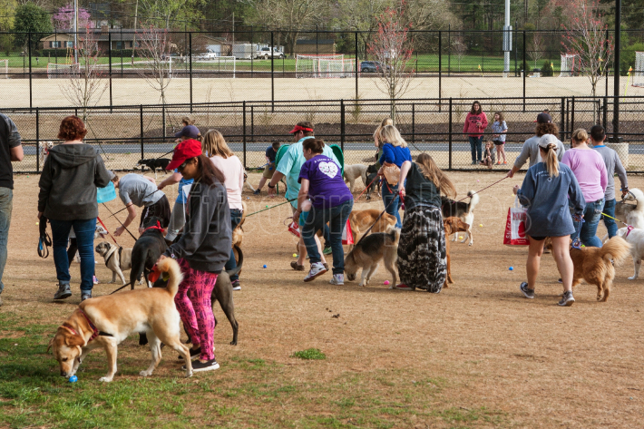 Several Dogs Sniff Doggy Treats At Plastic Easter Egg Hunt