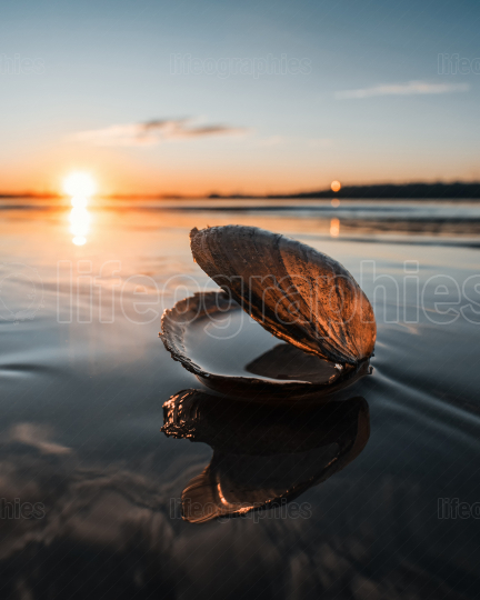 Shell on the beach and beautiful sunset