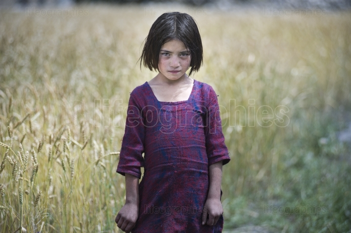 Shy girl in a wheat fields.