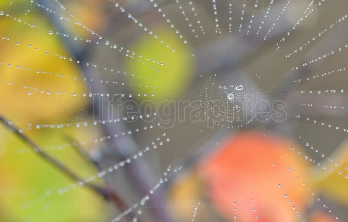 Spiderweb and dew drops in forest