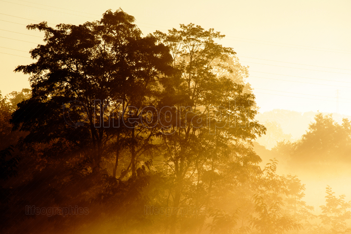 Sunrise on a background of a misty landscape with tree