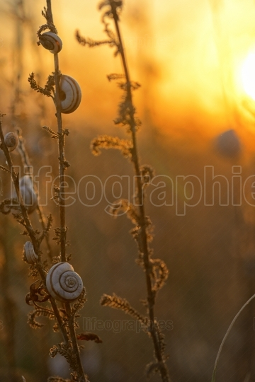 Sunset with snail shells