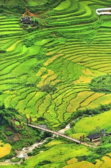 Terraced rice fields and bridge