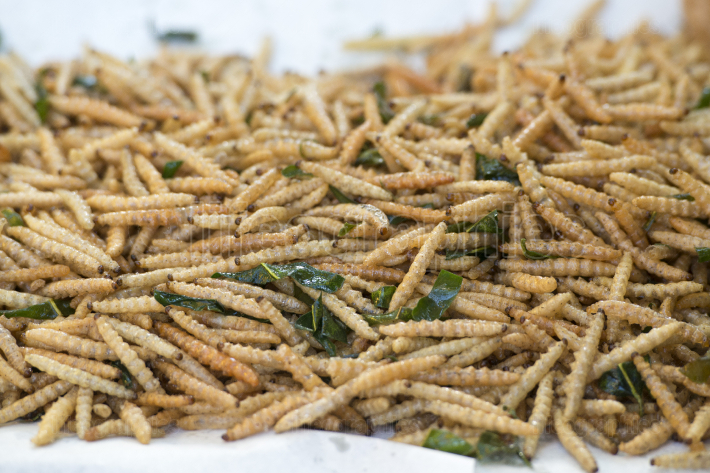 THAILAND CHIANG RAI MARKET FOOD INSECTS
