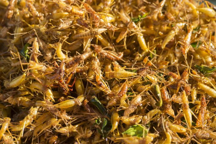 THAILAND ISAN SURIN MARKET FOOD INSECTS