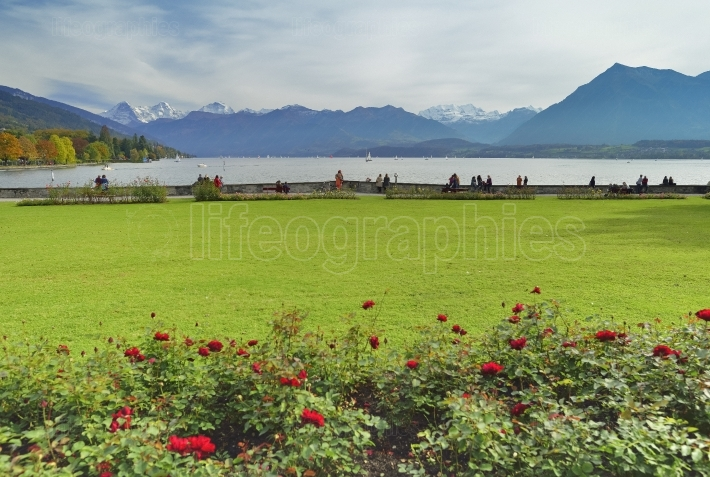 Thun lake with berner oberland.