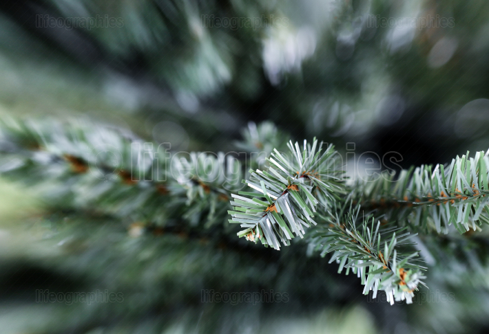 Traditional artificial Christmas tree in close up view