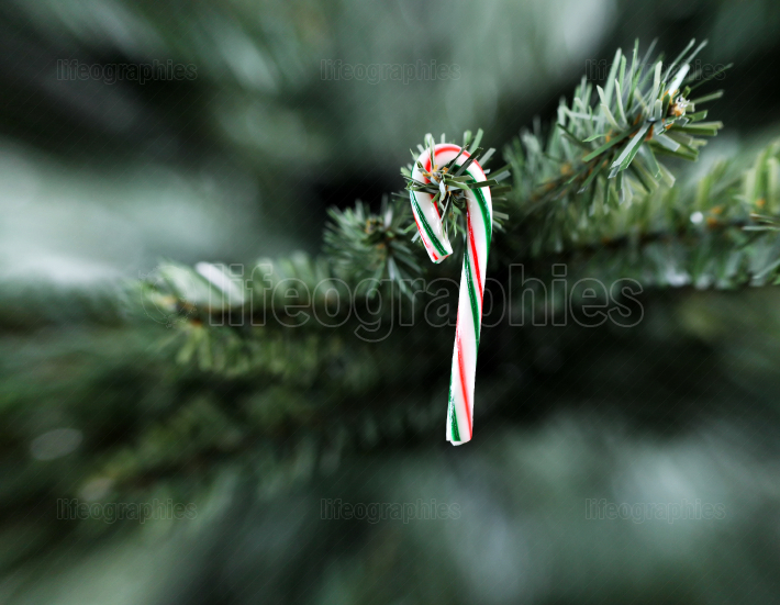 Traditional single stripped candy cane Christmas decoration hang