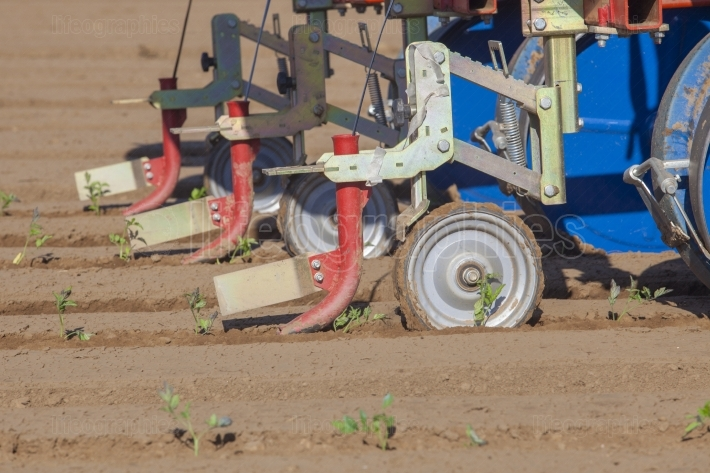 Transplanter machine injecting drip irrigation tape on ground