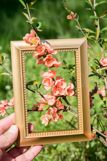 Tree bloom blossom beautiful flowers in a frame