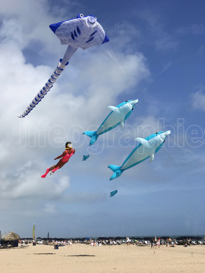 Unique Marine Life Kites Fly Above Fort Lauderdale Beach