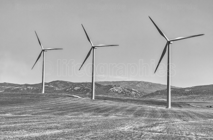 Wind turbines farm  Black and white