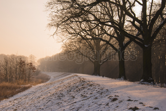 Winter bare tree path landscape photo
