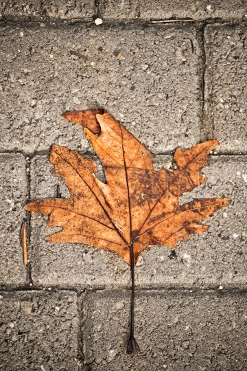 Withered leaf over concrete blocks