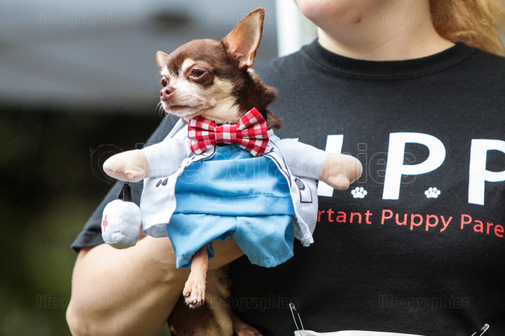 Woman Carries Dog Wearing Doctor Costume At Atlanta Doggy Con