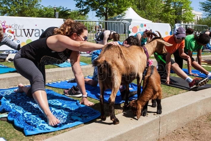 Woman Stretches And Pets Animal In Goat Yoga Class