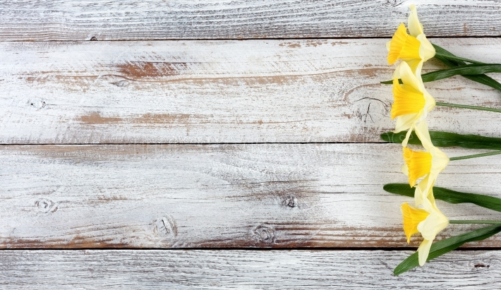 Yellow daffodils on white weathered wooden boards