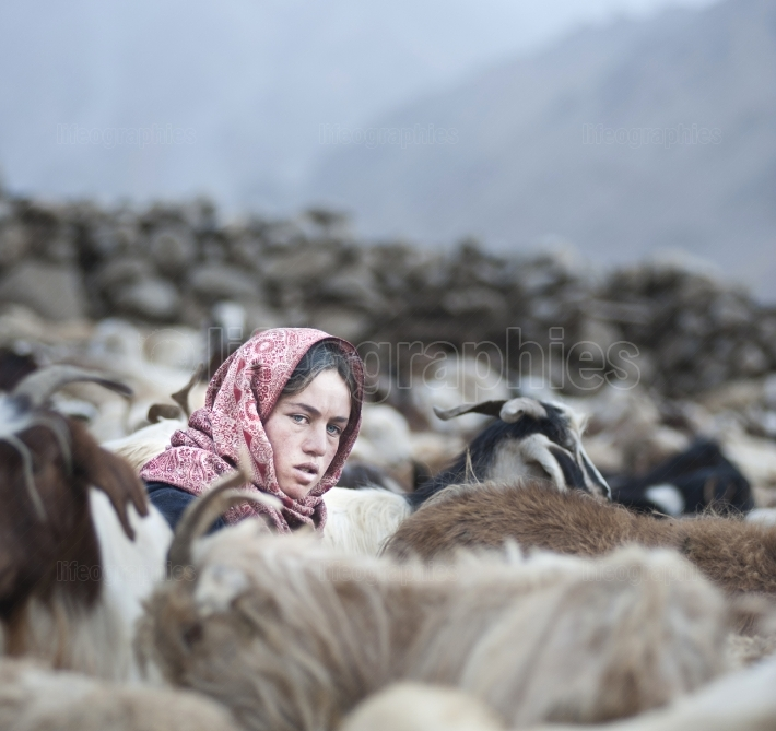 Young beautiful Sajida girl milking sheeps.