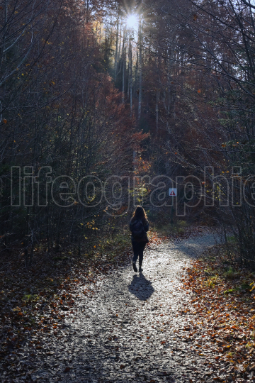 Young Girl With A Backpack Is Walking Through A Forest