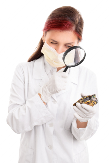 Young veterinarian examining a turtle with magnifying glass