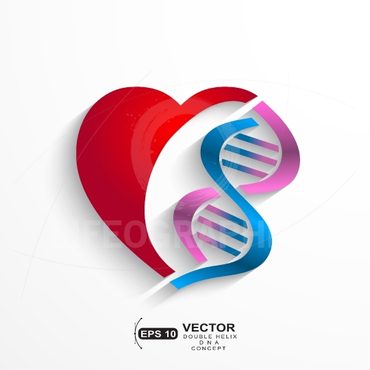 DNA concept.Heart with double helix symbols for medicine, geneti