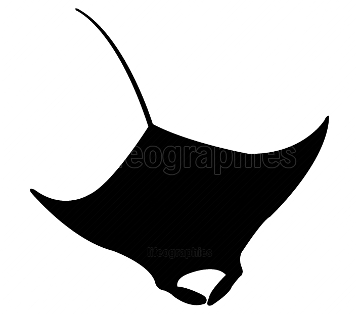 fish manta icon